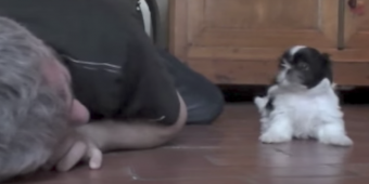(Video) Man Drops to the Floor Next to His Small Puppy. Get Ready to See Their Amazing Interaction