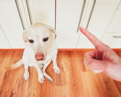 The Best Type of Home Flooring to Select for a Dog