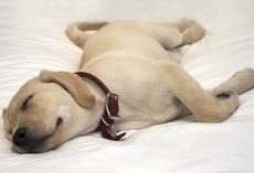 Unmasking the Truth as to Why a Dog Needs so Much Sleep