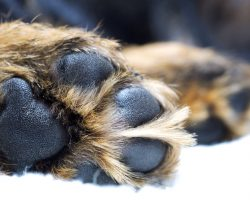 Why a Dog's Feet May be Smelling Like Fritos