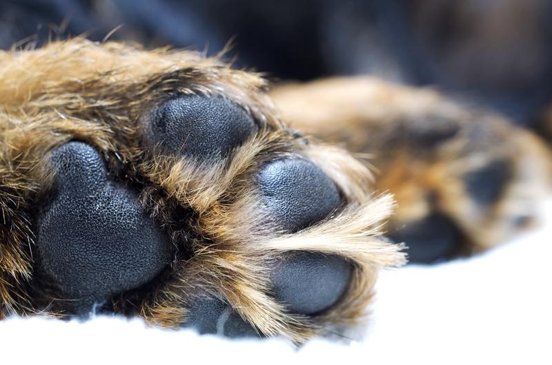 dog paws