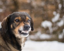 Important Aspects We Must Understand About Dog Growling