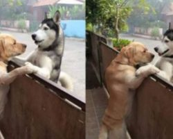 Dogs Separated by Fences Form the Most Beautiful Friendship