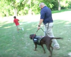 (Video) Veteran's Life is Forever Changed by His Service Dog, Merrick