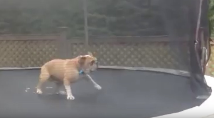 mudd on trampoline