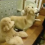 (Video) Mom is Getting Dinner Ready for Her Pups, Then Sees What They're up to in the Background