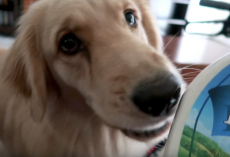 (Video) Sweet Service Dog Makes Hilarious Mistake When Asked to Bring Water to Her Mom