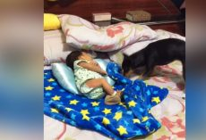 (Video) While a Baby is Fast Asleep, Dog Comes Over and Proceeds to Do the Sweetest Thing
