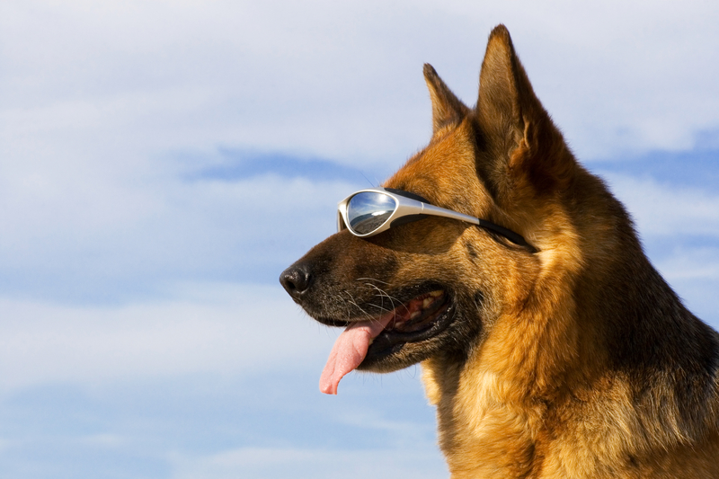 dog with glasses on