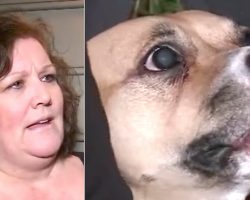 (Video) Newly Adopted Dog Won't Quit Growling. Nervous Owner Makes Scary Discovery