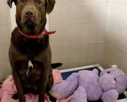 Epic Saga of Hank the Dog and His Hippo Has Us Grinning From Ear to Ear