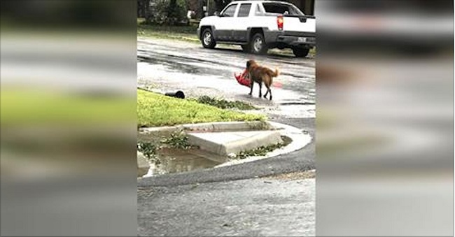 hurricane-harvey-otis-dog