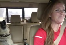 (Video) Mom is Taking a Drive, But it's Her Dog in the Backseat That Has Our Undivided Attention