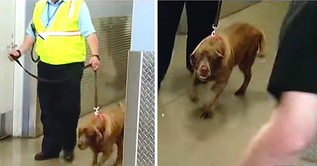 military dog reunited with sergeant