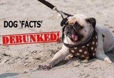 Debunked! False Dog Facts