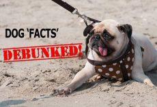 Debunked! False Dog Facts