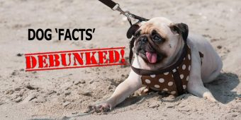 Debunked! False Dog Facts We Thought Were True