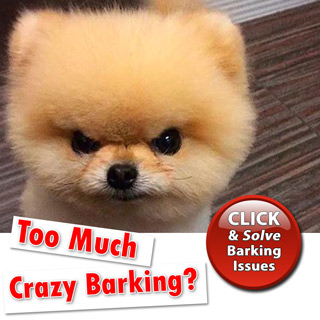 Too Much Crazy Barking?